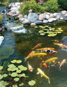 Eco watermart for Koi pond size requirements